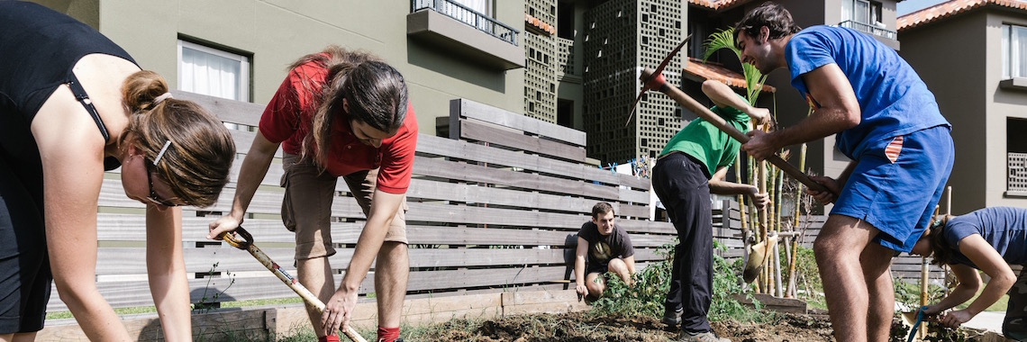 OIST staff and students working in the garden, tilling the soil