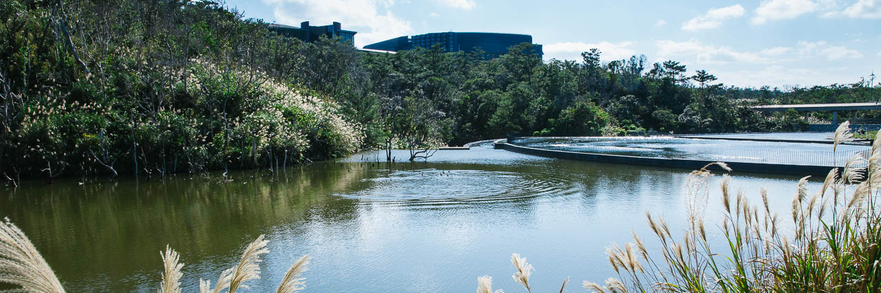 The OIST pond